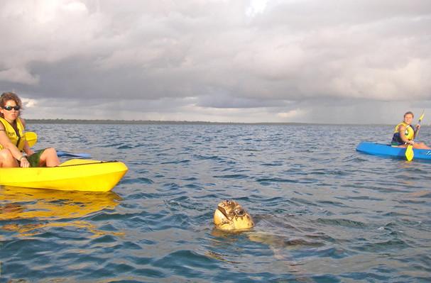 rainbow beach turtle kayak