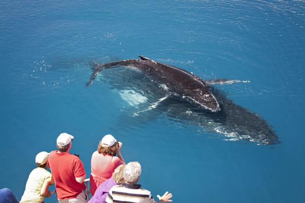 whale watch hervey bay  discount