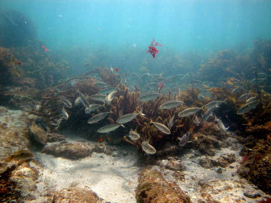 deals on goat island reserve dive