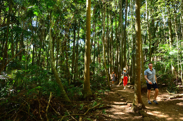 Springbrook & Tamborine Rainforest Tour Adventure