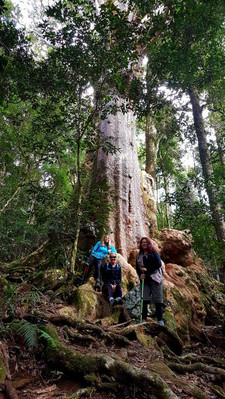 Lamington National Park Day Trip