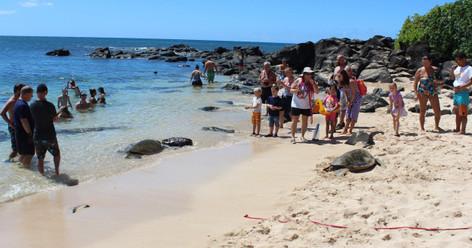Oahu Island Turtle Tour