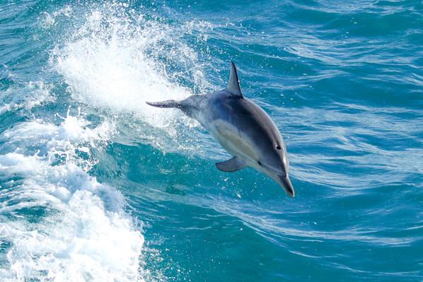 Phillip Island Dolphin & Whale Cruise deals