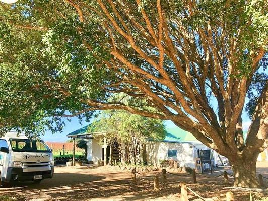 winery tour on Waiheke Island