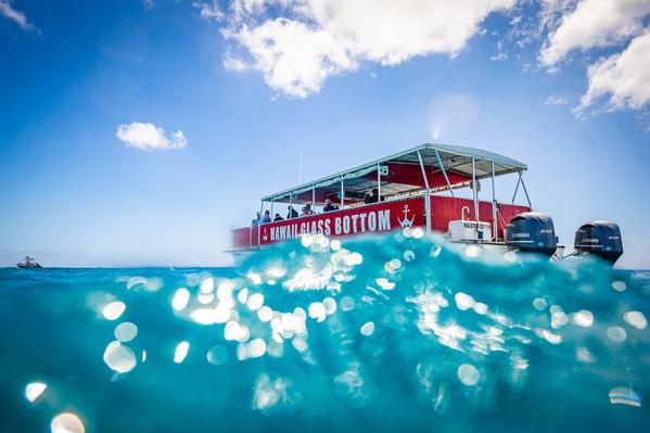 Oahu glass bottom morning wildlife cruise