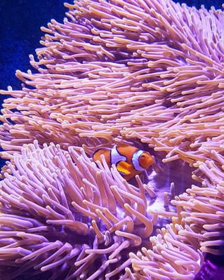 Cairns Aquarium Prices