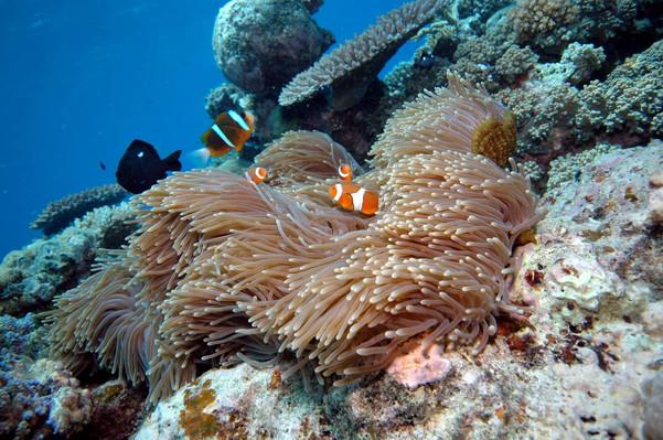 Reef Magic Cruises Deals