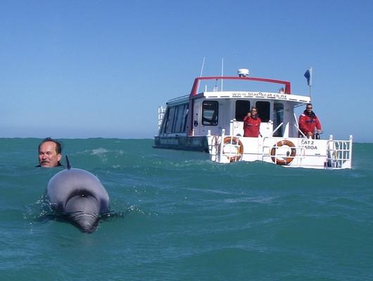 swimshot akaroa dolphin cruises