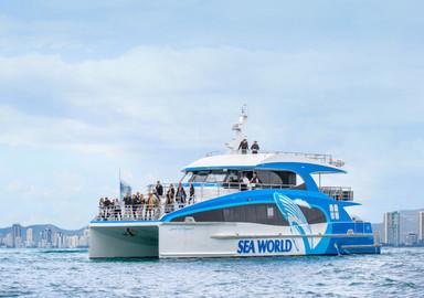 Sea World - Gold Coast Whale Watching Cruise