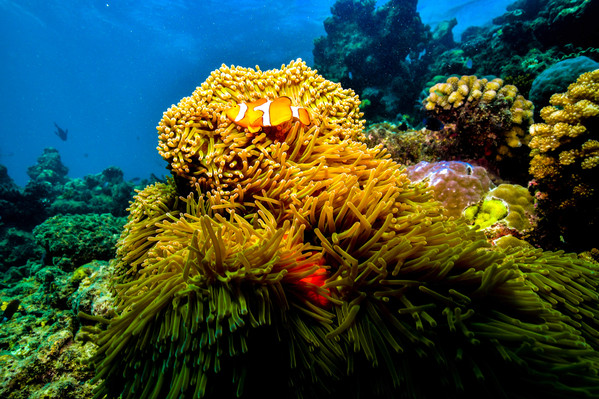 Dreamtime Dive & Snorkel Discount