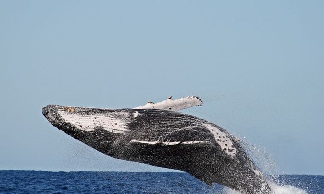 byron-bay-whale-watching-free-photos