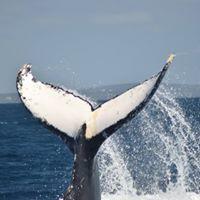 Whale Tour Augusta