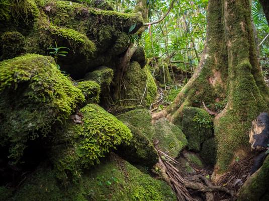 Devil's Thumb Hike – Manjal Jimalji Trail
