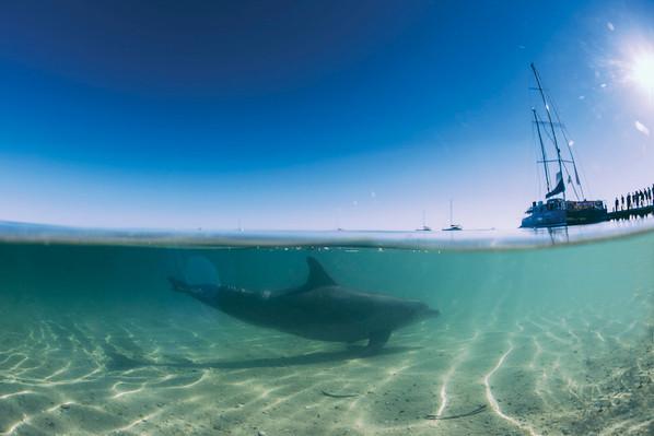 Ocean Park, south of Denham, Shark Bay, Tourism WA 104559.jpg