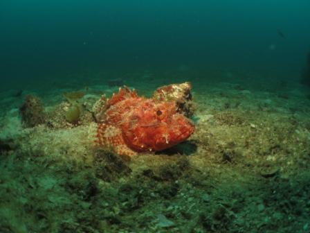 Canterbury deep diving