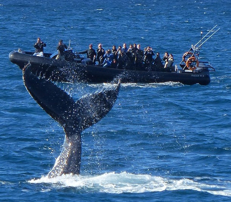 whale watching tours from Sydney