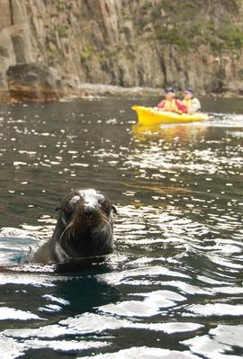 Tasmania kayak tours