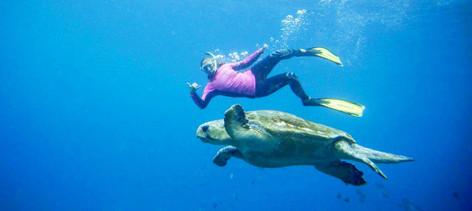 Snorkel Tour Of Julian Rocks Marine Reserve