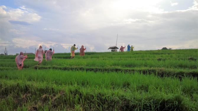 cheap rice field tour bali