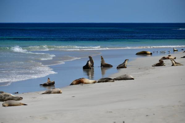 Kangaroo Island Wildlife Discovery Tour