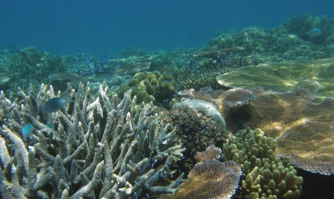 reef-daytripper-coral