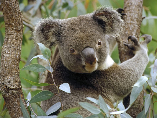 North Stradbroke Island - Day in Paradise Tour deals