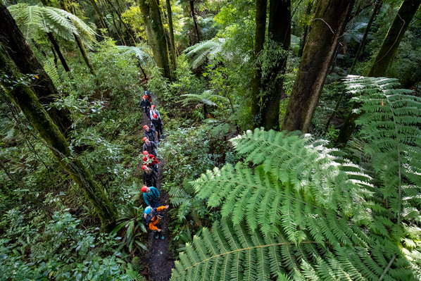 forest walk and zip line deal