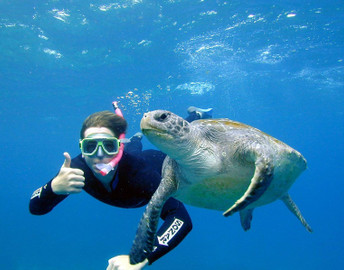 Certified Dive And Snorkel Tour At Julian Rocks