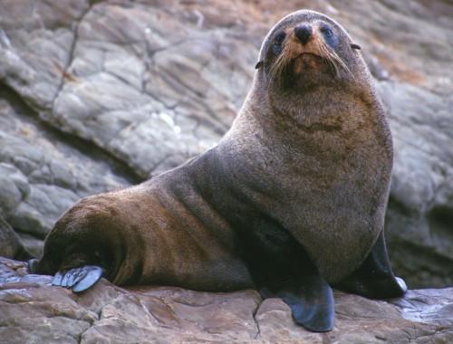 Ship Cove Seal Wildlife