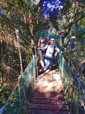 Lamington National Park Day Trip Deals