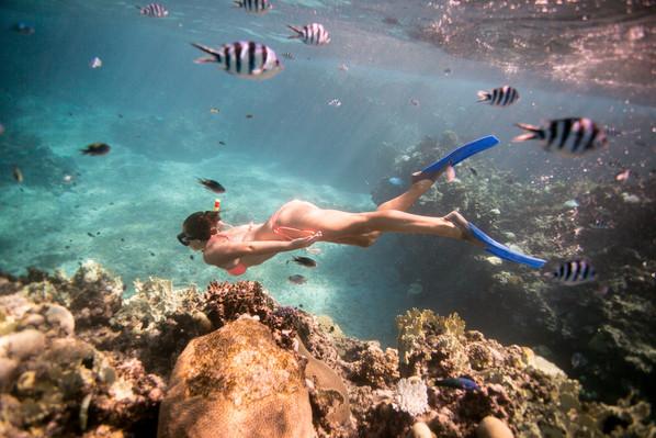 snorkel and shark dive Fiji