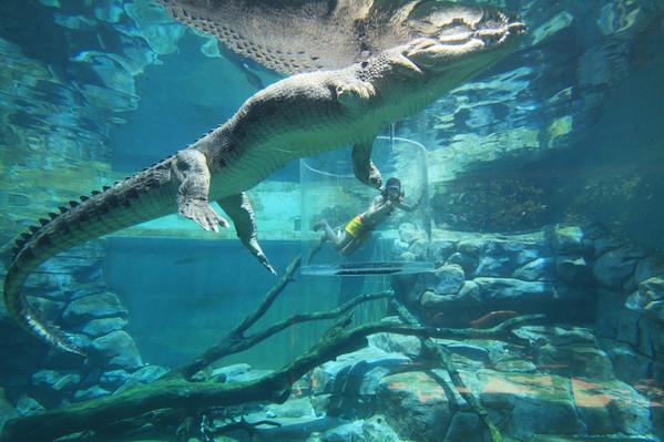 darwin croc tour