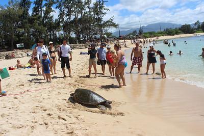 Oahu Island Circle Turtle Tour