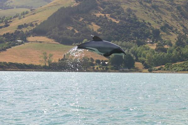 wildlife akaroa nature cruise