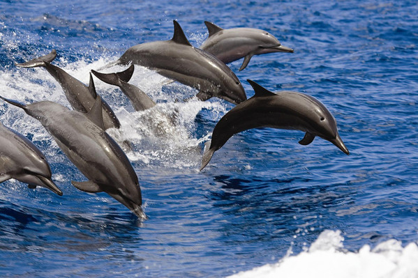 West Oahu Snorkel And Dolphin Spotting Tour