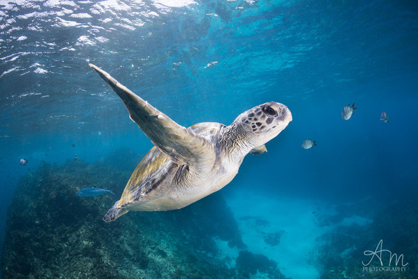 Julian Rocks Dive & Snorkel Tour