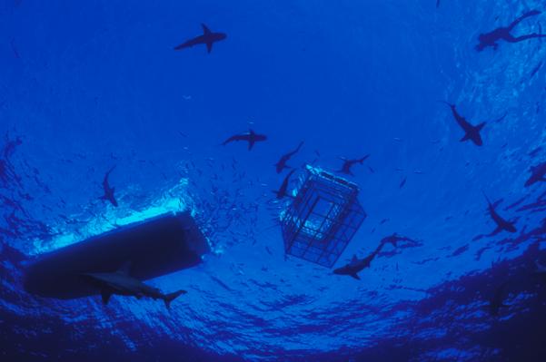 Shark Cage Diving deals