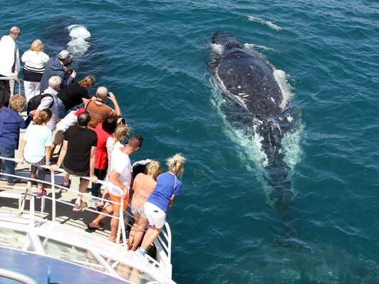 Whale Watching Gold Coast Tour