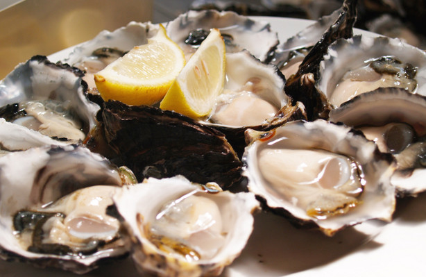 oysters bruny island day tour