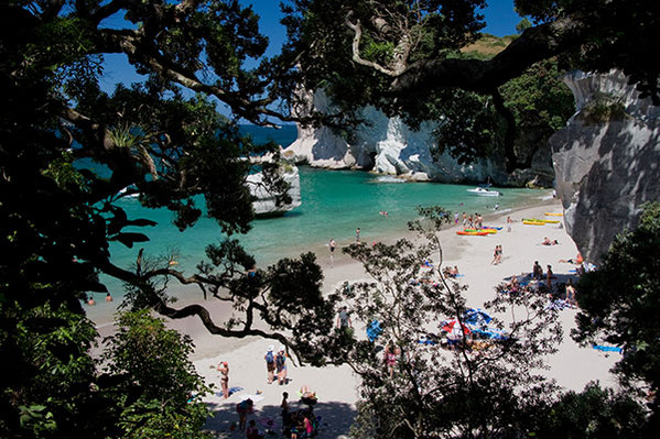 Cathedral Cove Hot Water Beach Tour