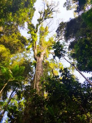 Mary-Cairncross-Rainforest-trek