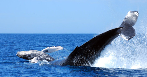 Whale Watching Tour Cabo San Lucas