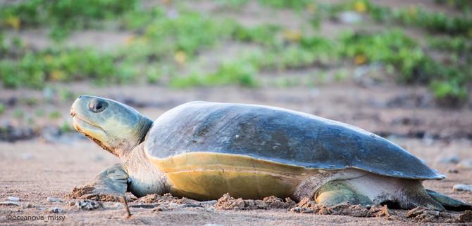 Turtle Tracks tour Darwin