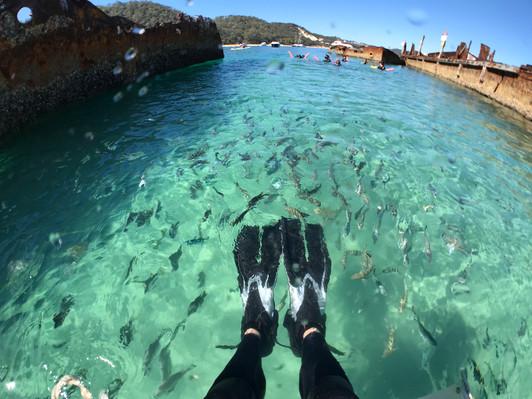 Brisbane Day Cruise & Eco Marine Safari