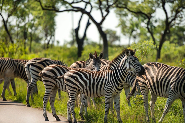 South African wildlife tour