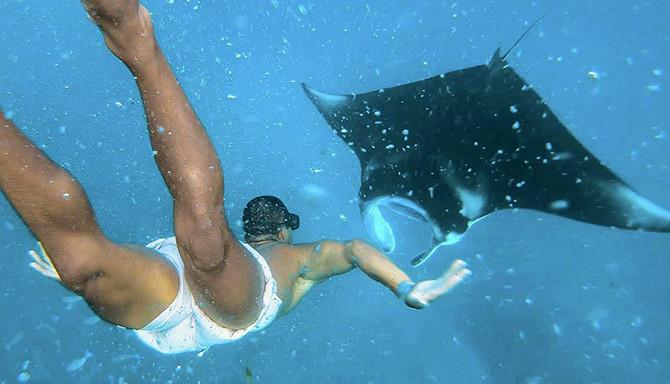 manta ray snorkel tour bali