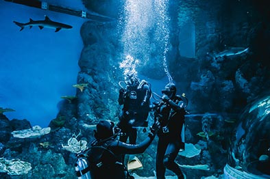 Dive With The Sharks at Cairns Aquarium