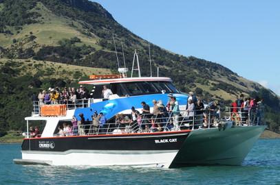 Akaroa Harbour Nature Cruise - 2 Hours