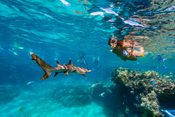 Ultimate Encounter: Snorkel with Sharks