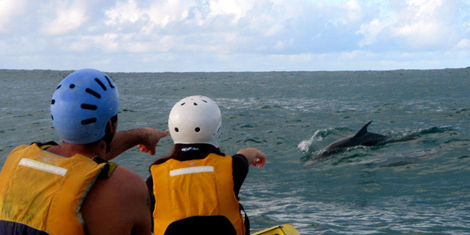 Byron-bay-kayak-with-dolphin
